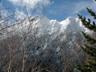 樹間に見える権現岳と旭岳