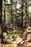 角兵衛沢の樹林帯