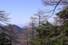 樹間に見える中央アルプス