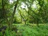 林道脇は緑がまぶしい