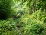 並木沢左岸の林道