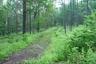 緑眩しい林道をいく