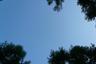 見上げれば雲ひとつない晴天