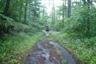 しばらくはしっかりした林道を歩く