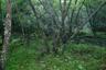 鬱蒼とした林の中の広河原沢を渡り