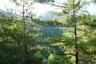 木々の間から西岳