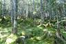 苔むした針葉樹林帯