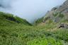 ガスに岩にハイマツで高山な雰囲気
