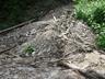 ブナ立尾根を下りきったところにある水場