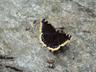 何という名前の蝶でしょう?