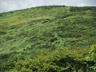 なだらかな緑の絨毯を縫う登山道