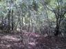 フカフカに積もった枯葉の上をツメる