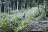 樹林帯を行く