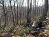 雪をもとめて樹林帯をすすむ