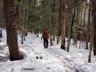 編笠岳東側の樹林帯を行く