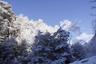 雪まとう木々2