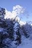 雪まとう木々3
