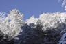 雪まとう木々4