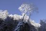 雪まとう木々5