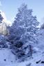 雪まとう木々7
