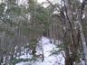南稜下部樹林帯の登り